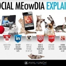 Social Media Explained by cute cats | Visual.ly