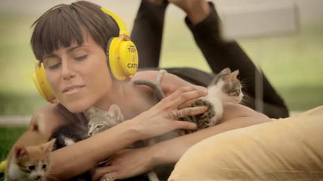 Soignez-vous avec des chatons | streetmarketing | Scoop.it