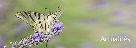 Noé lance le premier réseau social des jardiniers engagés pour la biodiversité   EntomoNews   Scoop.it