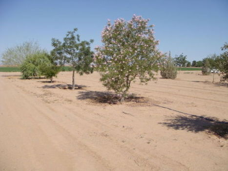 Master Gardener conference now open to the public   Arizona Daily Star   CALS in the News   Scoop.it