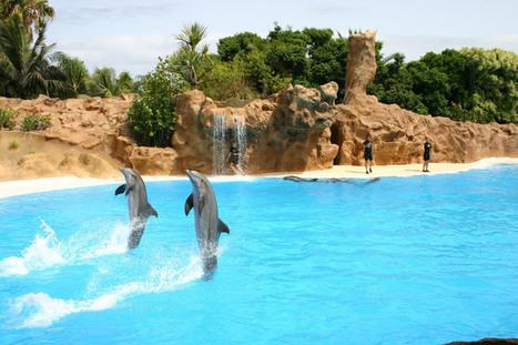 Delfines en cautividad. Opiniones enfrentadas. | Enriquecimiento ambiental en animales en cautividad y mascotas. | Scoop.it