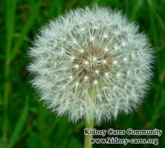 Dandelion Helps Reduce High Creatinine_Kidney Cares Community | chinesemedicinekidney | Scoop.it