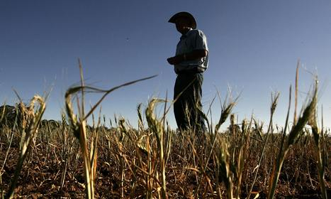 Climate change 'already affecting food supply' – UN | Sustain Our Earth | Scoop.it