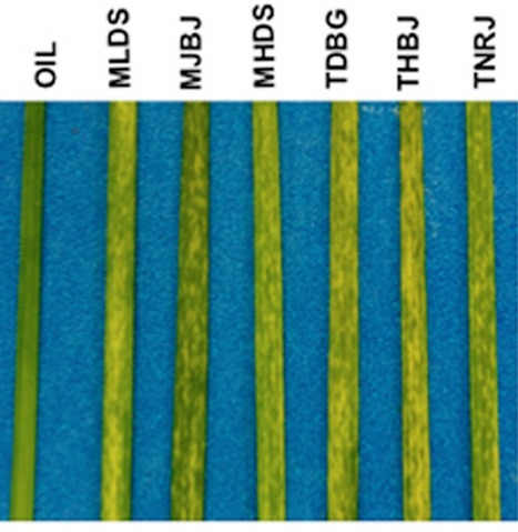 Frontiers | Using transcription of six Puccinia triticina races to identify the effective secretome during infection of wheat | Frontiers in Plant-Microbe Interaction | Rust fungi | Scoop.it