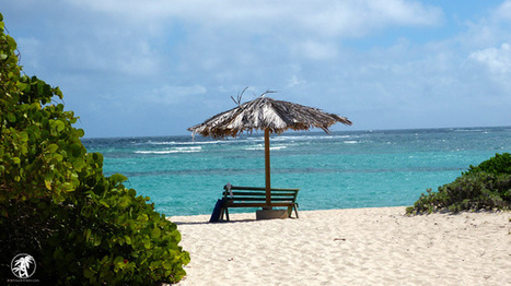 Loblolly Beach, Anegada BVI: Island Lime Videos   Caribbean Charm   Scoop.it