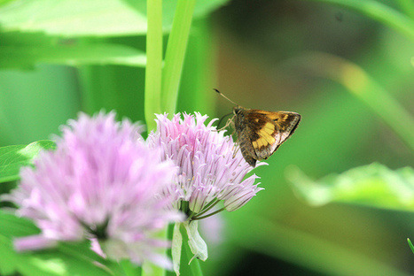 Butterfly | Photography | Scoop.it