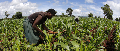 70% of Africans make a living through agriculture, and technology could transform their world | Confidences Canopéennes | Scoop.it