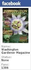 WashingtonGardener: Holly Shrubs and Trees: The Versatile Landscape Beauty ~ Washington Gardener Enews ~ December 2012 | Grown Green Gardens | Scoop.it