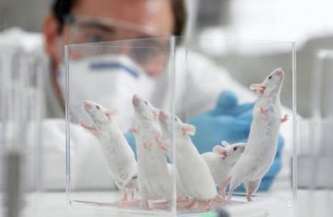 L'Ue bacchetta l'Italia: la legge sulla sperimentazione animale è troppo restrittiva | Appunti | Scoop.it