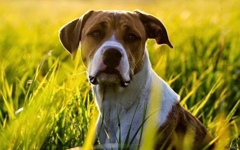imagenes de perros: imagenes de perros | imagenesdeperros | Scoop.it