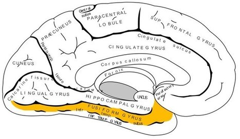 How Words Are Represented in the Brain | Multilíngues | Scoop.it