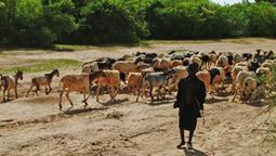Quel avenir pour les éleveurs du Sahel ? | SécuriteAlimentaireSahel | Scoop.it