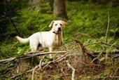 Bunny's Blog: New study reveals high level of Lyme disease concern among pet parents | Pet News | Scoop.it