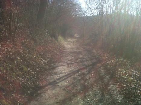 Sur le blog de @CBournac : Sortie VTT en Solo autour de Marennes | #Twittcyclos | Scoop.it