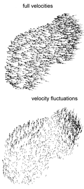 Amazing Starling Flocks Are Flying Avalanches | Amazing Science | Scoop.it