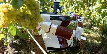 VIN: un robot vigneron - Geek Mag | GeekMag.fr | Scoop.it
