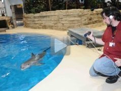 Dolphins keep lifelong social memories, longest in a non-human ... | Exploring Anthropology | Scoop.it