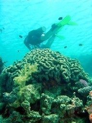 Marine Aquariums Help Revitalize Reefs in Florida - Marine Engineers | Aquaculture | Scoop.it