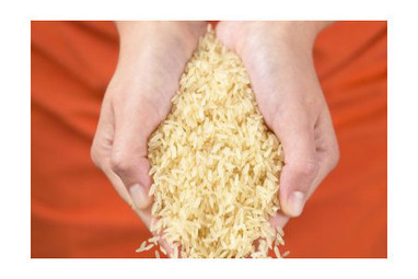 Chinese Scientists Cultivate High-yield Salt-resistant Rice | Plant Science in the 21st Century | Scoop.it