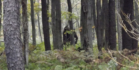 Is This Bigfoot Ambling Through The Woods? We Hope So (PICTURES) | Legends and Myths | Scoop.it