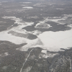 Why Is the Boreal Forest Breathing CO2 More Deeply?: Scientific American   Boreal Forests   Scoop.it