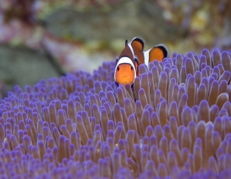 Top 10 Most Beautiful Reefs in the World   Undersea Discoveries   Scoop.it