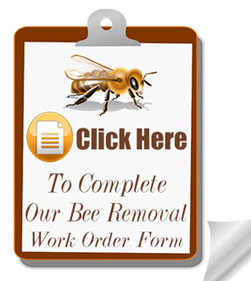 Bee Removal West Palm Beach | Willie the Bee Man | 877-561-2333 | Willie the Bee Man - Bee Removal Expert | Scoop.it