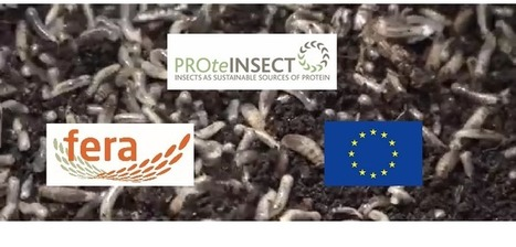 Insect feed conference will reveal pig trial outcomes | Pig World | Protein Alternatives: Insects as Mini-Livestock - #InsectMeal | Scoop.it
