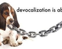 Ban Devocalization Nationwide - The Petition Site | Animal Welfare | Scoop.it
