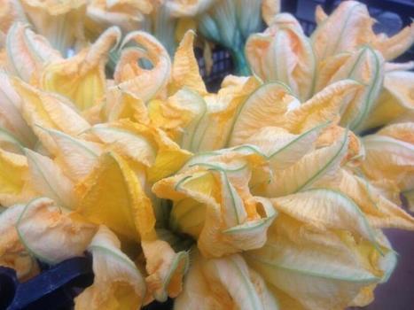 Twitter / ACDENICE: Des fleurs de courgettes... ... | Le jardin créatif | Scoop.it