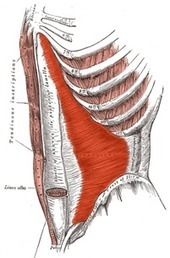 The Role of the Transverse Abdominis in Low Back Pain - Mike Reinold | mesociclo | Scoop.it