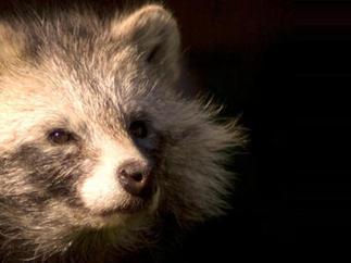 Fur flap bites retailers - CBS News   Plant Based Transitions   Scoop.it
