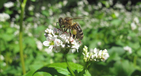 La Gazette de l'arbre aux abeilles - N° 29 - Août 2016 | Insect Archive | Scoop.it