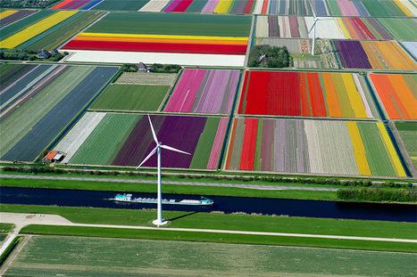 Tulip Fields in Netherlands Create Designs Worth ... - Artsnapper | Cris Val's Favorite Art Topics | Scoop.it