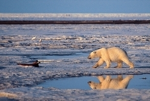 #Oil is the new gold in Arctic 'cold rush' ~ #CarvingUp a fragile #environment | Rescue our Ocean's & it's species from Man's Pollution! | Scoop.it