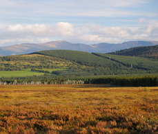 Report eases Scottish fears over tree planting - 6/22/2012 - Farmers Weekly   Business Scotland   Scoop.it