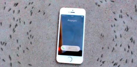 Non, cette vidéo ne prouve pas que les ondes téléphoniques influencent les fourmis | Frans en mixed media | Scoop.it