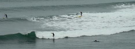 5 Diferencias entre el Surf y el Paddle Surf   Surf para principiantes   Scoop.it