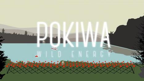 Pokiwa, les insectes générateurs de courant | EntomoScience | Scoop.it