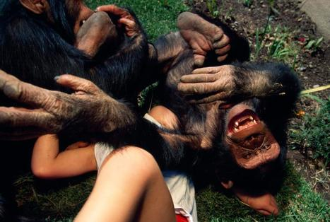 Do Animals Laugh? Tickle Experiments Suggest They Do - StumbleUpon | enjoy yourself | Scoop.it