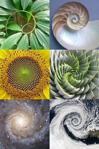 Mandalas Explained | glad.is | Spirituality & Philosophy | Scoop.it