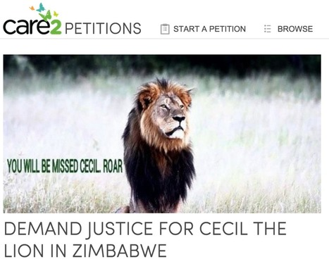 A petition demanding justice for Cecil the lion is getting signatures faster than we can count | Nature Animals humankind | Scoop.it