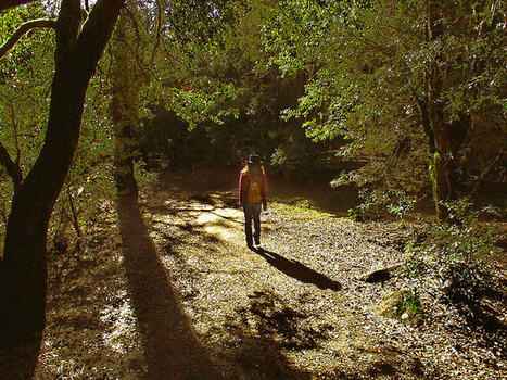 Hemingway, Thoreau, Jefferson and the Virtues of a Good Long Walk | museums | Scoop.it