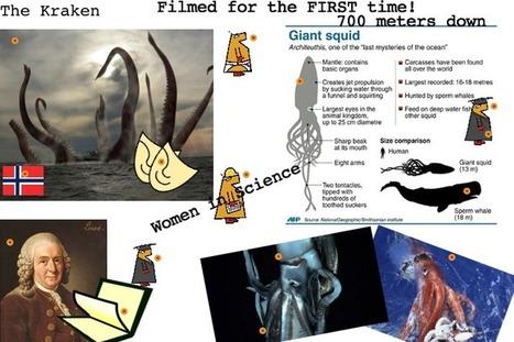 Giant Squid Caught On Film!   Jabberites   The interactive Classroom   Scoop.it