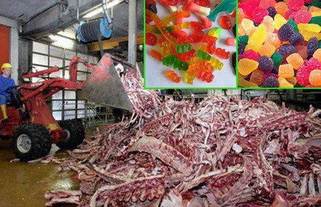 THE RIGHTS OF THE ANIMALS: Gummy Bears are made from the left over bones and muscles of dead animals. | THE ONE | Scoop.it