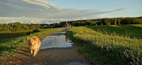 Horizon Dog Training - Greenville SC | For Pet Lovers | Scoop.it