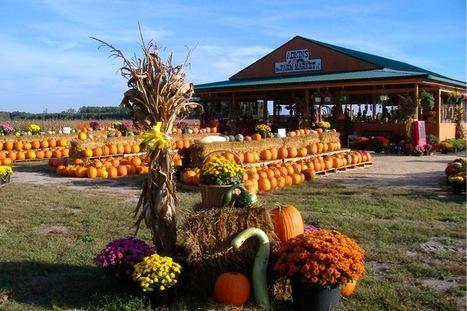 Maryland and Delaware Pumpkin Patches to Explore in 2016 - DelmarvaLife | Ocean City MD & Coastal DE Beach Real Estate - ShoreFun4U - BeachHomes4Sale & Rent - Susan Antigone - 'Sun, Sea, Style' | Scoop.it
