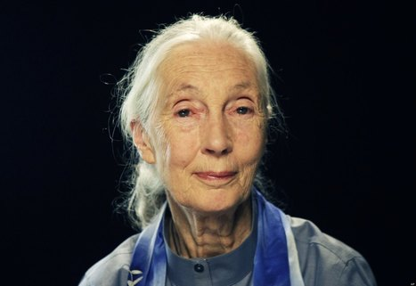 Jane Goodall Calls On #Vancouver #Aquarium To Release #Whales  #Dolphins | Rescue our Ocean's & it's species from Man's Pollution! | Scoop.it