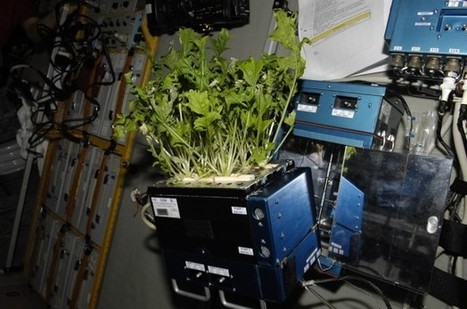Plants Can Grow Without Gravity - Space News - redOrbit | Best Astronomy | Scoop.it