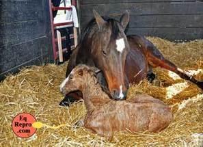 Horses Breeding Short Courses | Equine Reproduction | Scoop.it